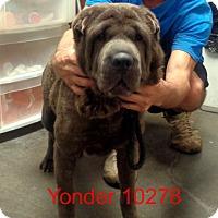 Adopt A Pet :: Yonder - baltimore, MD