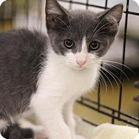 Adopt A Pet :: Missy - Sacramento, CA