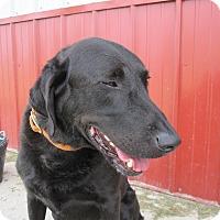 Adopt A Pet :: Hank - Buffalo, WY