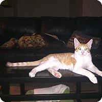 Adopt A Pet :: Lucky - Mesa, AZ