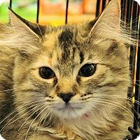 Adopt A Pet :: Lily Ann - Duluth, GA