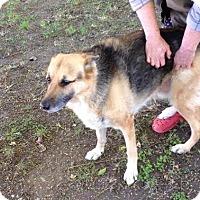 Adopt A Pet :: Jasmine - Courtesy Post - Encino, CA