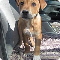 Adopt A Pet :: Betty - Oakland, AR