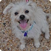 Adopt A Pet :: Céline - Atlanta, GA