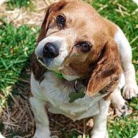 Adopt A Pet :: Estelle - Westminster, MD
