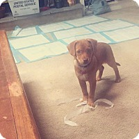 Adopt A Pet :: Buttercup - Elyria, OH