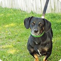 Adopt A Pet :: Pumba - Shelby, MI