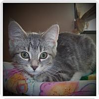 Adopt A Pet :: LOGAN - Medford, WI