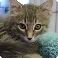 Adopt A Pet :: Fluffy - West Palm Beach, FL