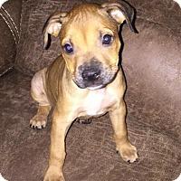 Adopt A Pet :: Susie - Fort Lauderdale, FL