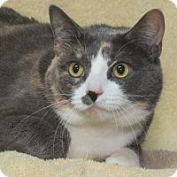 Adopt A Pet :: Madison - Elmwood Park, NJ