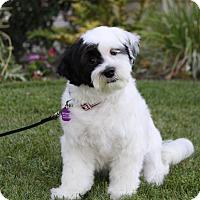 Adopt A Pet :: MARGARET - Newport Beach, CA