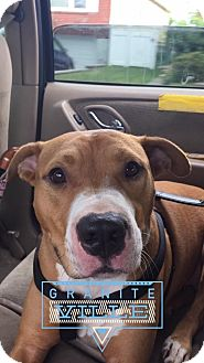 Pit Bull Terrier Mix Dog for adoption in Staten Island, New York - Patsy