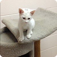 Adopt A Pet :: Romeo - Gadsden, AL