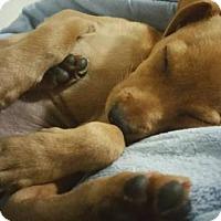 Adopt A Pet :: Eggos - Davis, CA