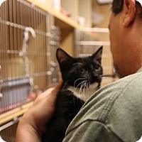 Adopt A Pet :: Pavarotti - Rochester, MN