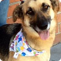 Adopt A Pet :: LAVENDER (video) - Los Angeles, CA
