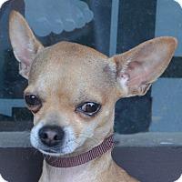 Adopt A Pet :: Gabe - Bridgeton, MO