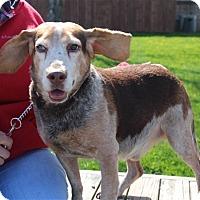 Adopt A Pet :: Abe - Elyria, OH