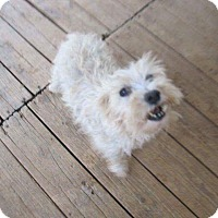 Adopt A Pet :: Ivory - Oakland, FL