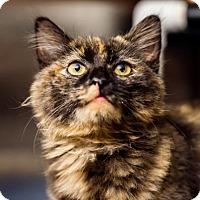 Adopt A Pet :: Raven - Palm Springs, CA