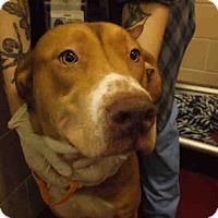 Adopt A Pet :: FINNEGAN - Rockford, IL