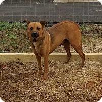 Adopt A Pet :: Choco - Lexington, TN