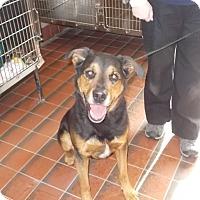 Adopt A Pet :: URGENT!! Bailey - Caledon, ON