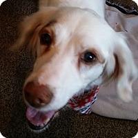 Adopt A Pet :: FLINT - Pine Grove, PA