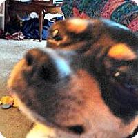 Adopt A Pet :: Skippy - Dayton, OH