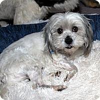 Adopt A Pet :: MONTY - Mission Viejo, CA