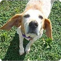 Adopt A Pet :: Bonnie Lynn - Columbus, OH