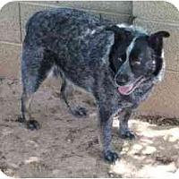 Adopt A Pet :: Katie - Phoenix, AZ