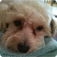 Adopt A Pet :: Jacob - San Francisco, CA