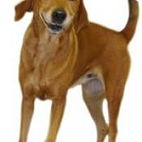 Adopt A Pet :: Sally - Inverness, FL