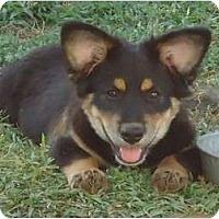 Adopt A Pet :: Hunter - Arlington, TX