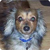 Adopt A Pet :: Benji - Andrews, TX