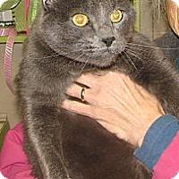 Adopt A Pet :: Chubbers - Fairbury, NE