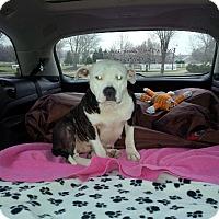Adopt A Pet :: Tabitha - Lancaster, PA