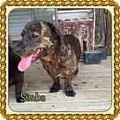 Adopt A Pet :: Simba (POM-CD)