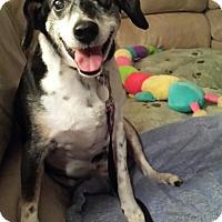 Adopt A Pet :: Louise - Huntsville, AL