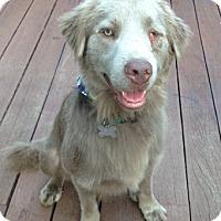 Adopt A Pet :: Grayson - MEET HIM! - Norwalk, CT