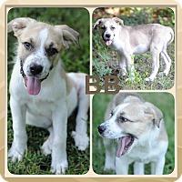 Adopt A Pet :: BB meet me 8/21 - East Hartford, CT