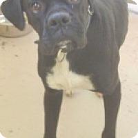Adopt A Pet :: Heath - Brentwood, TN