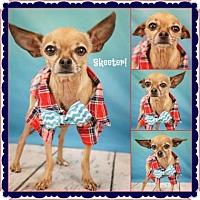 Adopt A Pet :: Skeeter3 - Scottsdale, AZ