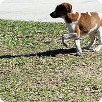 Adopt A Pet :: Jilly - Weeki Wachee, FL