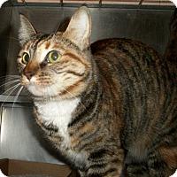 Adopt A Pet :: Merida - El Cajon, CA