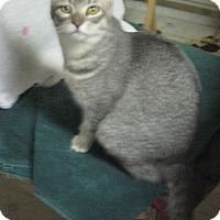 Adopt A Pet :: Marian - Woodland, CA
