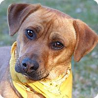 Adopt A Pet :: Pumpkin - Mocksville, NC