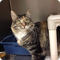 Adopt A Pet :: T-9  Lucy - Triadelphia, WV